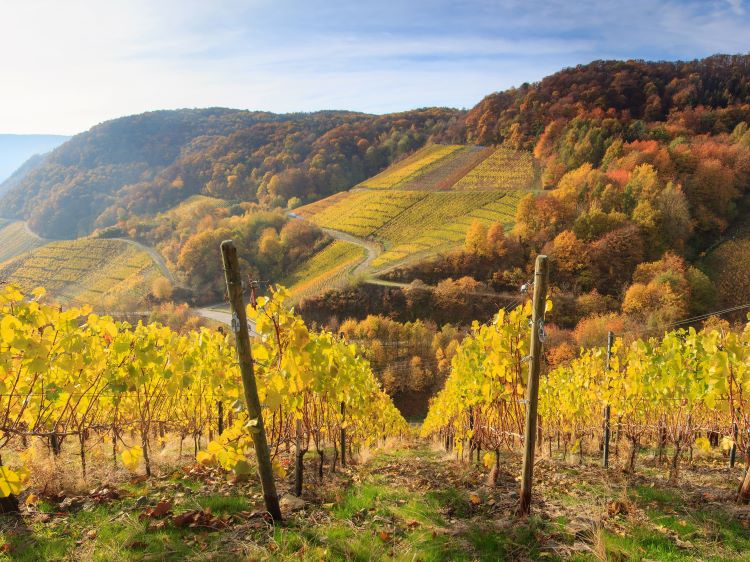 Germany: camping between the vineyards