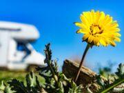 Zin in kamperen: voorjaarsacties bij onze dealers