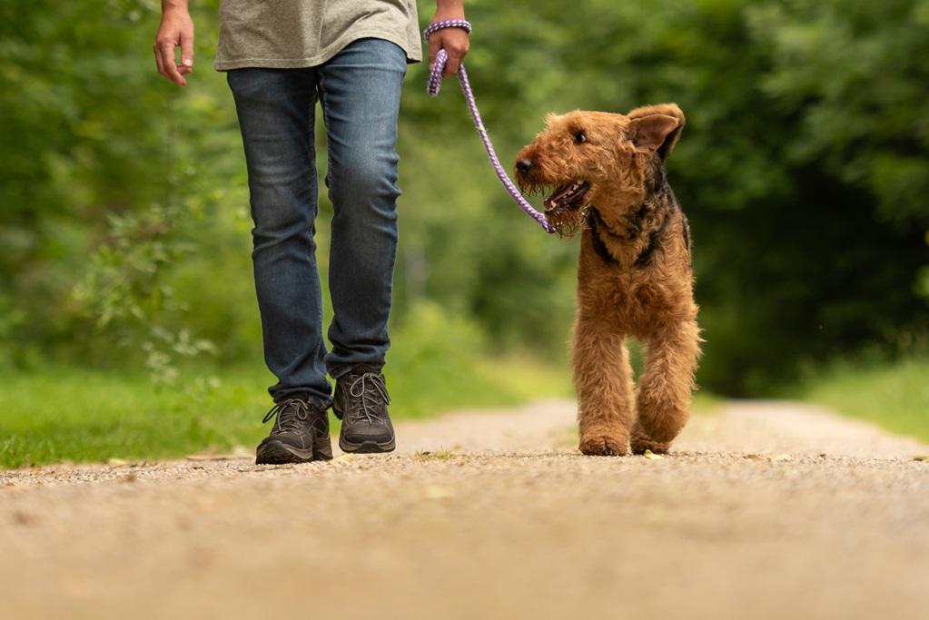Laat je hond wennen aan de camping door een rondje te lopen.