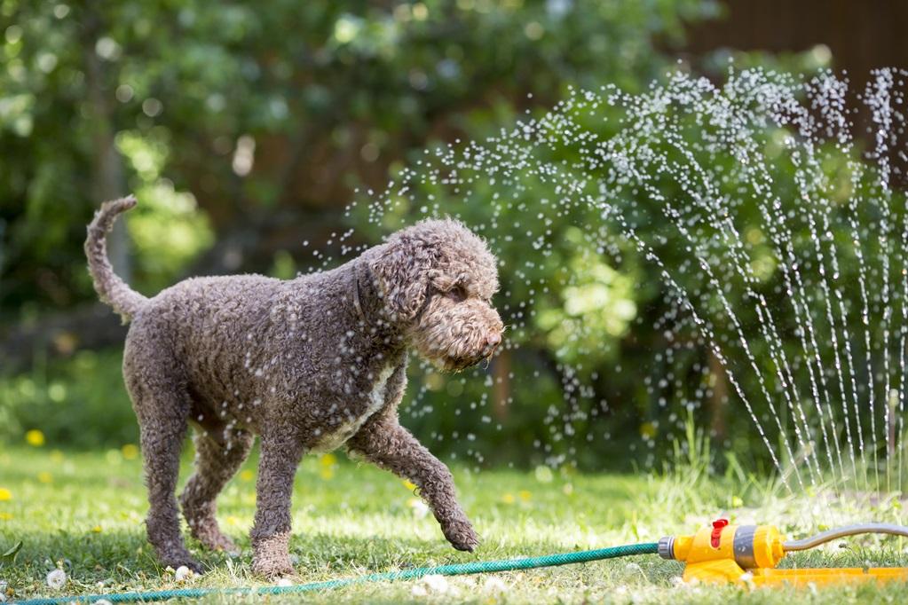 Een vrolijke manier om je hond te helpen met afkoelen.