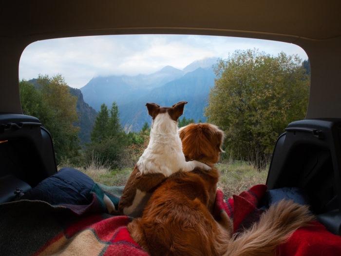 Kamperen met je hond: comfortabel op de camping