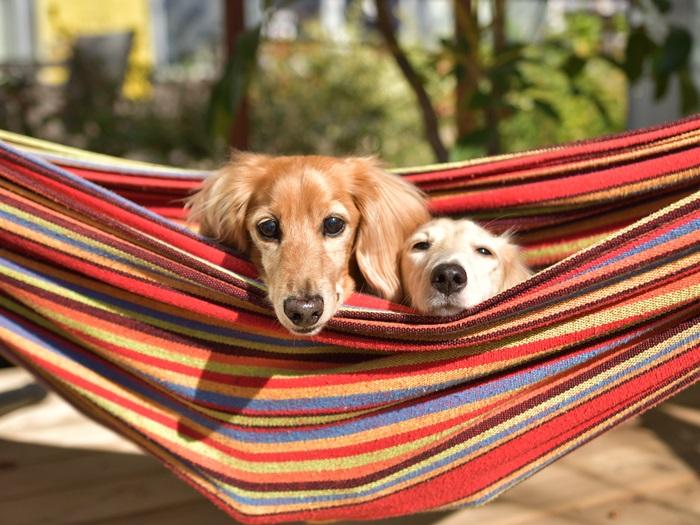 Kwart kampeerders neemt hond mee